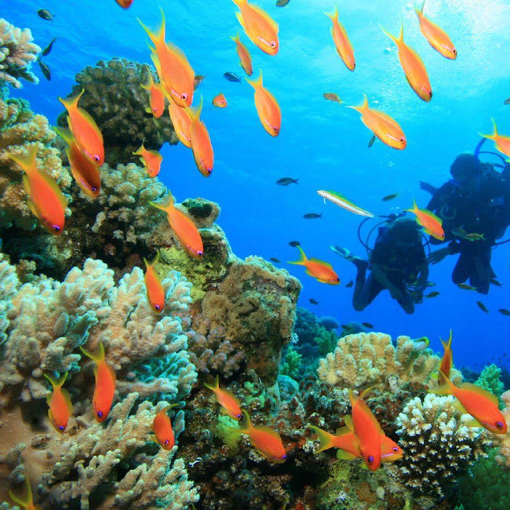 Scuba Diving Racha Island